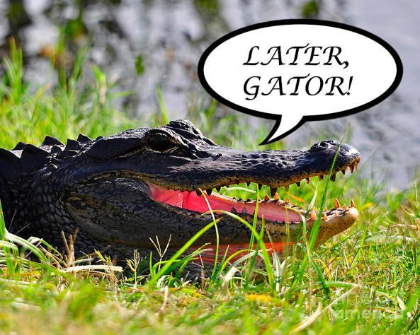 week 4 gator